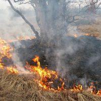 Три человека оштрафованы за пал сухой травы в Нижегородской области