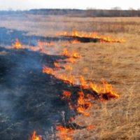 Шесть человек оштрафованы за сутки за сжигание сухой травы