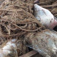 Браконьеров осудят за незаконный улов рыбы в Городецком районе