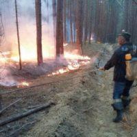 МЧС предупреждает о высокой вероятности лесных пожаров в регионе