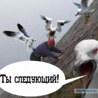 Daily Telegram: подкоп под Носкова, последнее слово Воронова и продвижение гидроузла