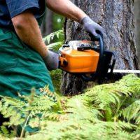 В Нижегородской области спиленное дерево насмерть раздавило парня