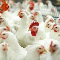 В Нижегородской области яйца и курятина подешевели из-за конкуренции