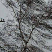 Сильный ветер надвигается на Нижегородскую область