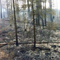 В Нижегородской области объявлена чрезвычайная пожароопасность лесов