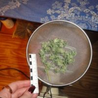 В Нижегородской области задержана группа наркодельцов