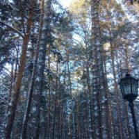 Тракториста осудят за повреждение леса в Керженском заповеднике