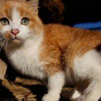 В Нижнем Новгороде аферисты похищали деньги на «лечение животных»