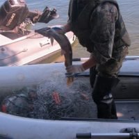 В Краснобаковском районе рыбак попал под статью за вылов 3 рыб сетями