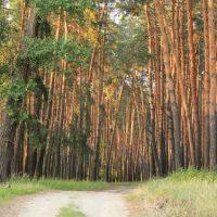 Житель Тоншаевского района осужден за незаконную вырубку леса