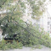Сотрудник спортшколы пострадал при падении на него дерева в Сарове