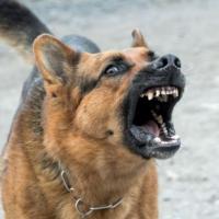 В Нижнем Новгороде подрались две собаки и их хозяева