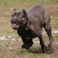 В Кстово собака откусила у 21-летней девушки полуха