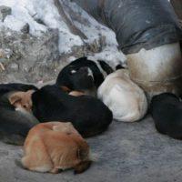 В Нижнем Новгороде собаки обглодали тело своей хозяйки