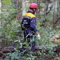 В Сокольском районе ищут 83-летнюю пенсионерку, пропавшую в лесу