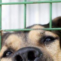 Концлагерь для собак обнаружили в Нижнем Новгороде