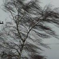 МЧС: сильный ветер ожидается в Нижегородской области