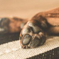 В Нижегородской области мужчина был жестоко избит из-за собаки