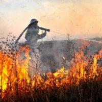 Более 20 гектаров травы сгорело в Нижегородской области 1 мая