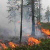 Экстренное предупреждение в связи пожароопасностью объявлено в регионе
