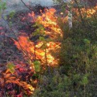 Лесной пожар зарегистрирован в Варнавинском районе 10 мая