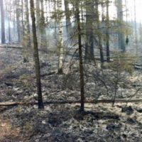МЧС предупреждает о вероятности лесных пожаров в Нижегородской области