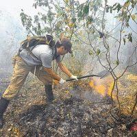 55 лесных пожаров произошло в Нижегородской области в 2016 году