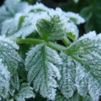 МЧС предупреждает о заморозках в Нижегородской области