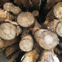 В Нижегородской области суд рассмотрит дело «черного лесоруба»