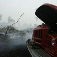 В Нижегородской области ожидается высокая пожароопасность лесов
